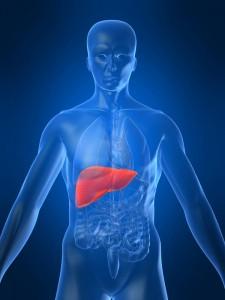 liver transplants